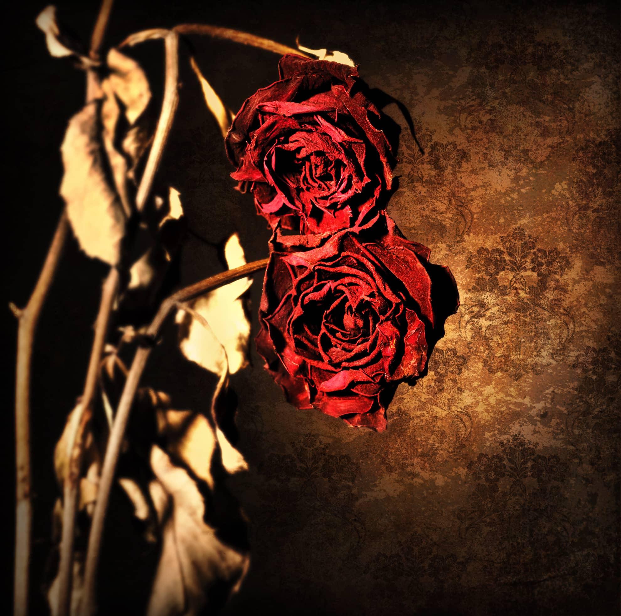 Chris Dignam Roses copy